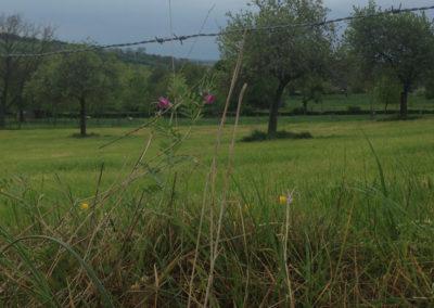 omgeving-paradieske-foto-27